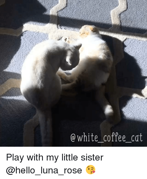 Memes, Rose, and 🤖: Q White Coffee Cat Play with my little sister @hello_luna_rose 😘