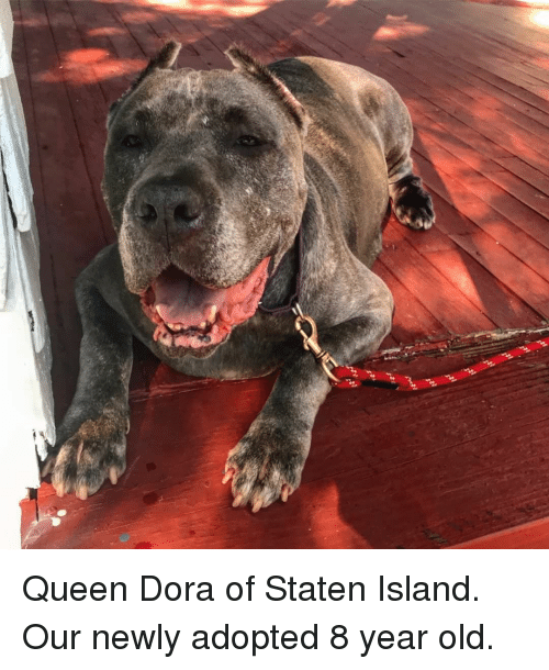 Queen, Dora, and Old: Queen Dora of Staten Island. Our newly adopted 8 year old.