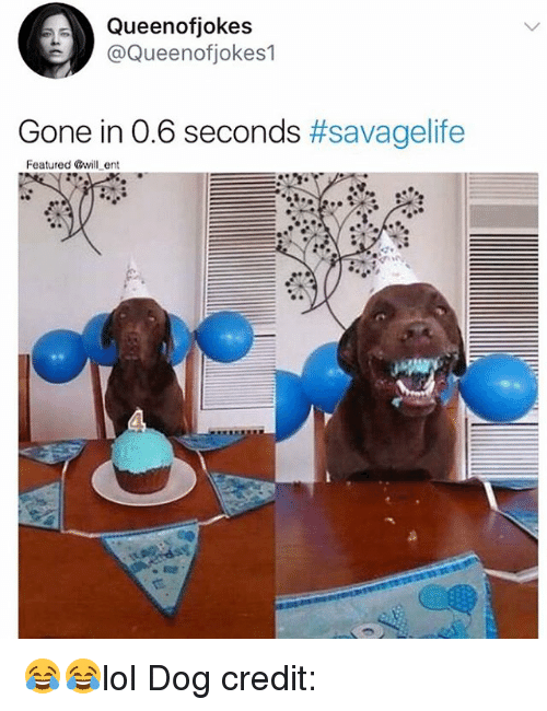 Memes, Savage, and 🤖: Queenofjokes  @Queenofjokes1  Gone in 06 seconds #savage re  Featured @will ent 😂😂lol Dog credit: