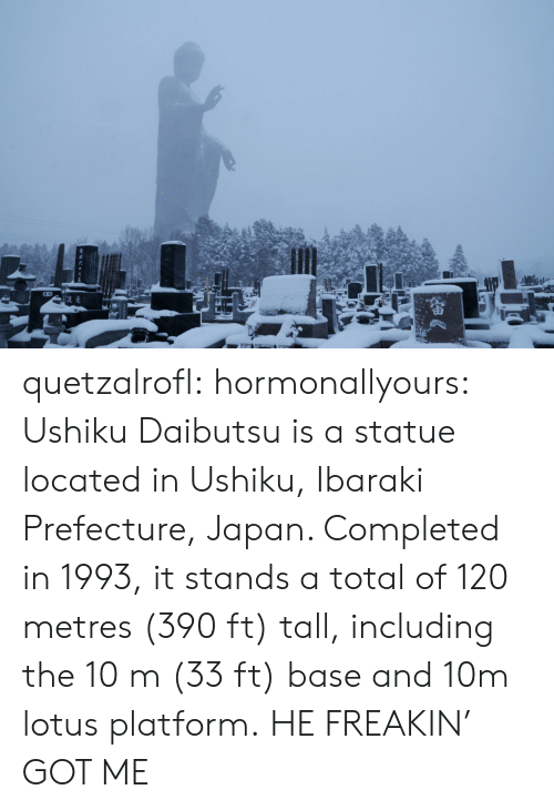 Lotus: quetzalrofl: hormonallyours:  Ushiku Daibutsu is a statue located in Ushiku, Ibaraki Prefecture, Japan. Completed in 1993, it stands a total of 120 metres (390 ft) tall, including the 10m (33 ft) base and 10m lotus platform.  HE FREAKIN' GOT ME
