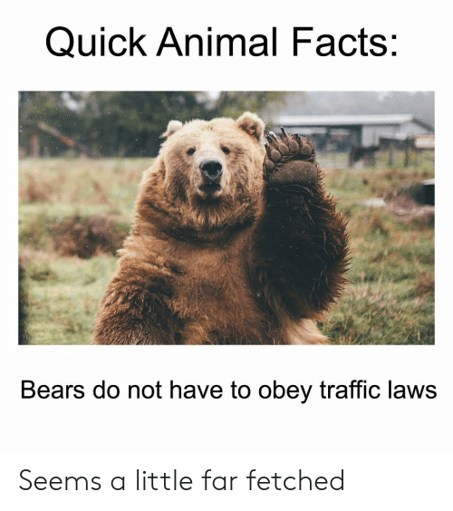 obey: Quick Animal Facts:  Bears do not have to obey traffic laws Seems a little far fetched