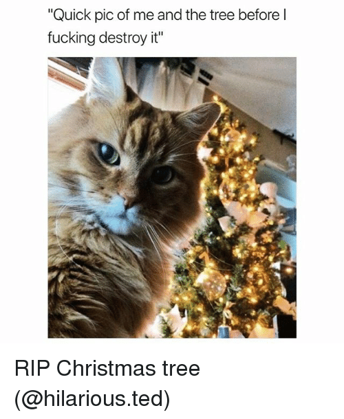 "Christmas, Fucking, and Funny: ""Quick pic of me and the tree before l  fucking destroy it"" RIP Christmas tree (@hilarious.ted)"