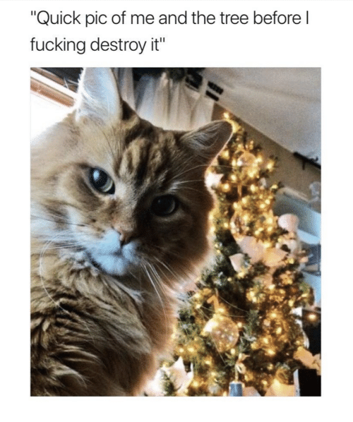 """Fucking, Tree, and Quick: """"Quick pic of me and the tree before l  fucking destroy it"""""""