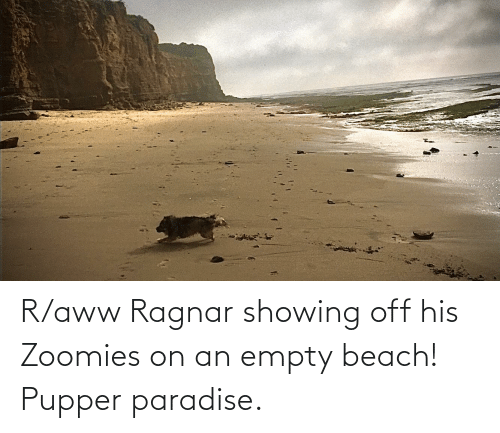 Aww, Paradise, and Zoomies: R/aww Ragnar showing off his Zoomies on an empty beach! Pupper paradise.