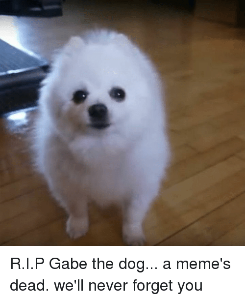 Gabe: R.I.P Gabe the dog... a meme's dead.  we'll never forget you