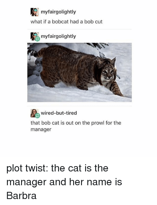 Bobcat: R myfairgolightly  what if a bobcat had a bob cut  K myfairgolightly  wired-but-tired  that bob cat is out on the prowl for the  manager plot twist: the cat is the manager and her name is Barbra