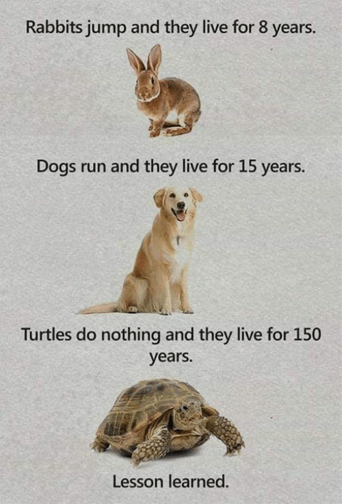 They Live: Rabbits jump and they live for 8 years.  Dogs run and they live for 15 years.  Turtles do nothing and they live for 150  years.  Lesson learned.