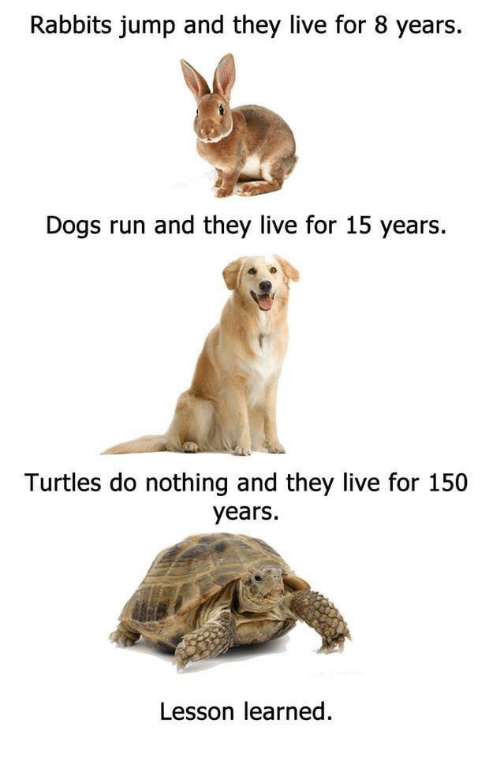 They Live: Rabbits jump and they live for 8 years.  Dogs run and they live for 15 years  Turtles do nothing and they live for 150  years.  Lesson learned.