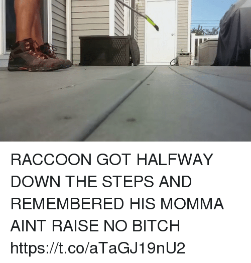 Bitch, Memes, and Raccoon: RACCOON GOT HALFWAY DOWN THE STEPS AND REMEMBERED HIS MOMMA AINT RAISE NO BITCH https://t.co/aTaGJ19nU2
