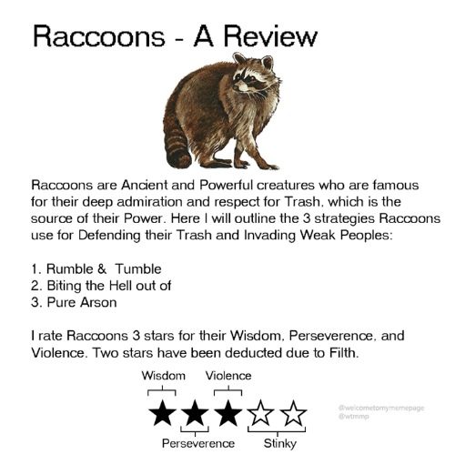 Dank, Respect, and Trash: Raccoons - A Review  Raccoons are Ancient and Powerful creatures who are famous  for their deep admiration and respect for Trash. which is the  source of their Power. Here l will outline the 3 strategies Raccoons  use for Defending their Trash and Invading Weak Peoples:  1. Rumble & Tumble  2. Biting the Hell out of  3. Pure Arson  I rate Raccoons 3 stars for their Wisdom. Perseverence, and  Violence. Two stars have been deducted due to Filth.  Wisdom Violence  @welcometomymemepage  @wtmmp  Perseverence Stinky