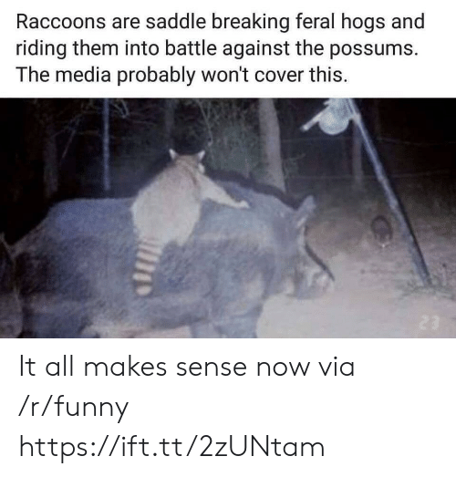 hogs: Raccoons are saddle breaking feral hogs and  riding them into battle against the possums.  The media probably won't cover this. It all makes sense now via /r/funny https://ift.tt/2zUNtam