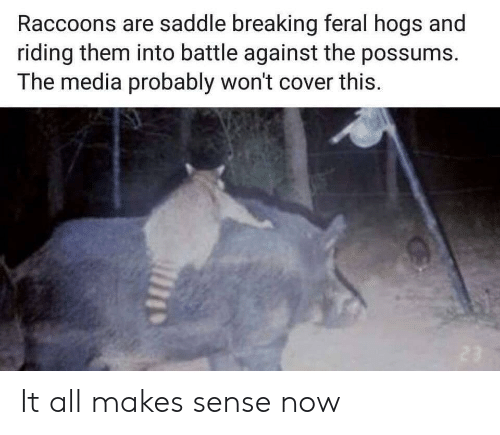 hogs: Raccoons are saddle breaking feral hogs and  riding them into battle against the possums.  The media probably won't cover this. It all makes sense now