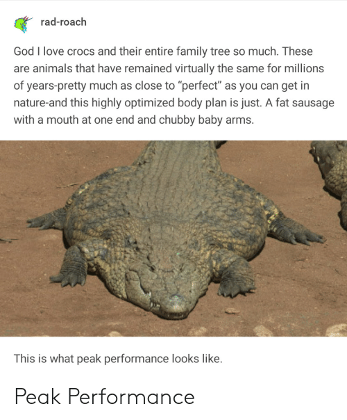 """chubby: rad-roach  God I love crocs and their entire family tree so much. These  are animals that have remained virtually the same for millions  of years-pretty much as close to """"perfect"""" as you can get in  nature-and this highly optimized body plan is just. A fat sausage  with a mouth at one end and chubby baby arms.  This is what peak performance looks like. Peak Performance"""