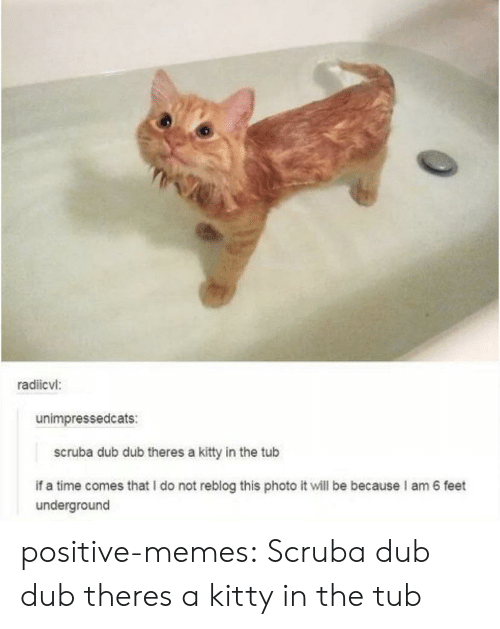 tub: radiicvl:  unimpressedcats:  scruba dub dub theres a kitty in the tub  if a time comes that I do not reblog this photo it will be because I am 6 feet  underground positive-memes:  Scruba dub dub theres a kitty in the tub