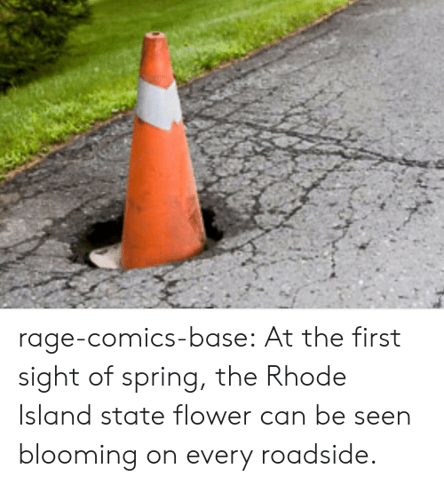 Rhode Island: rage-comics-base:  At the first sight of spring, the Rhode Island state flower can be seen blooming on every roadside.