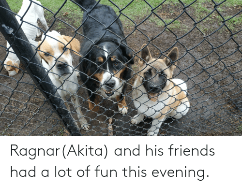 ragnar: Ragnar(Akita) and his friends had a lot of fun this evening.