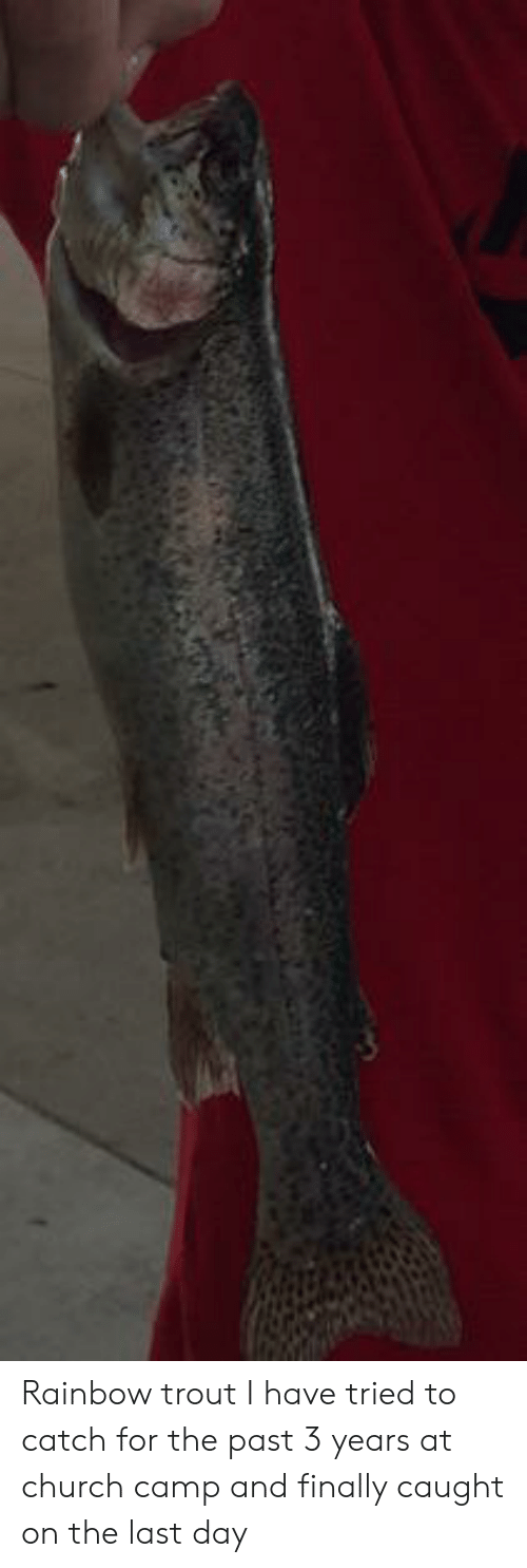 Church Camp: Rainbow trout I have tried to catch for the past 3 years at church camp and finally caught on the last day