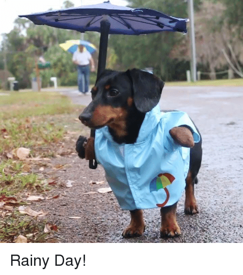 Funny Rainy Day: 25+ Best Memes About Rainy-Day