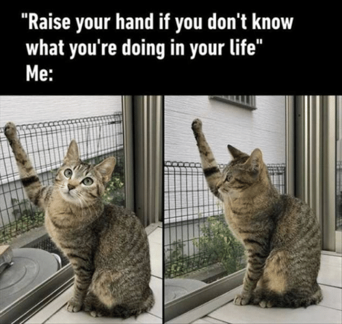 """raise your hand if: """"Raise your hand if you don't know  what you're doing in your life""""  Me:"""