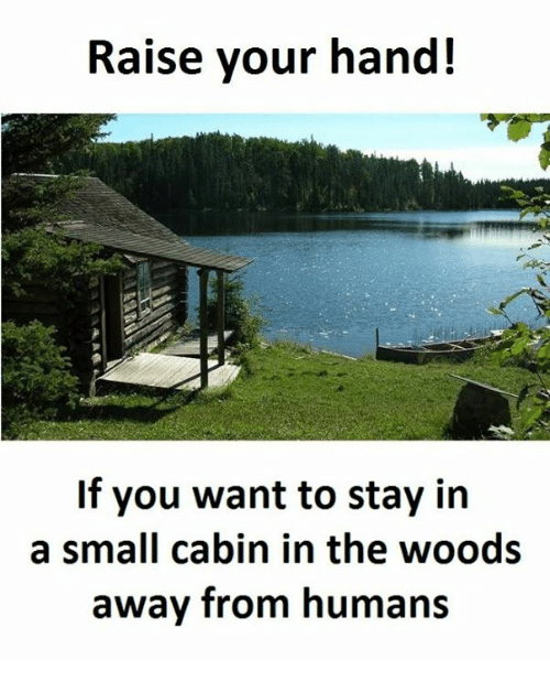 cabin in the woods: Raise your hand!  If you want to stay in  a small cabin in the woods  away from humans