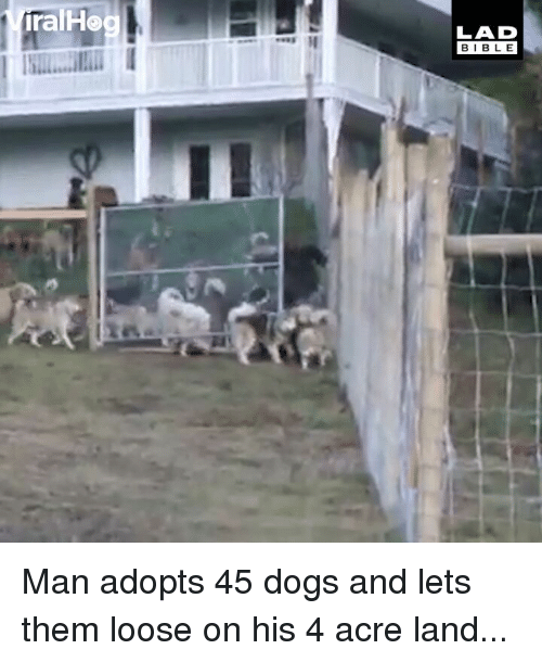 Dogs, Memes, and Bible: ralHo  LAD  BIBLE Man adopts 45 dogs and lets them loose on his 4 acre land...