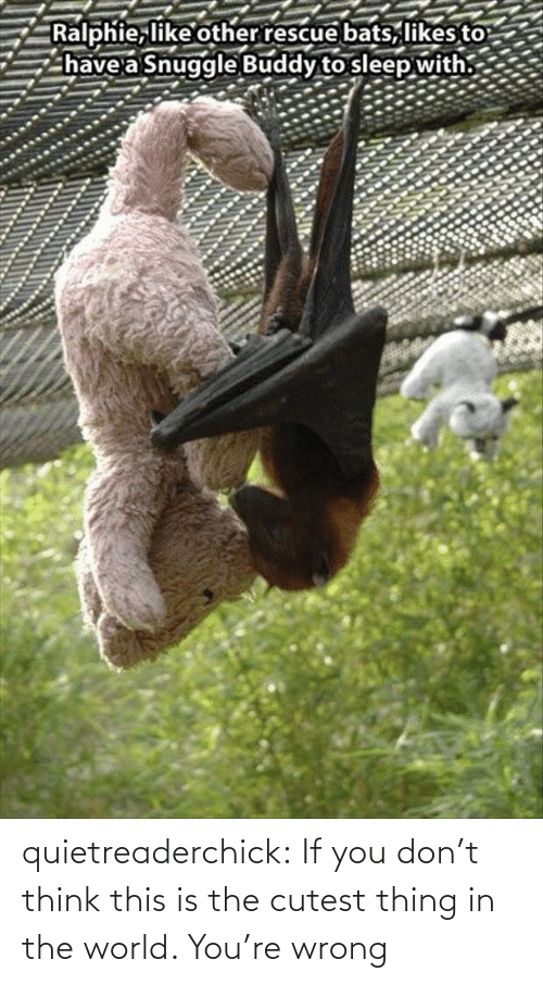 Ralphie: Ralphie, like other rescue bats, likes to  have a Snuggle Buddy to sleep with. quietreaderchick:  If you don't think this is the cutest thing in the world. You're wrong