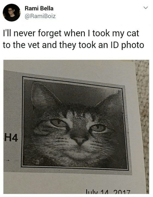 They Took: Rami Bella  @RamiBoiz  I'll never forget when I took my cat  to the vet and they took an ID photo  H4  Iuly 14 20N17