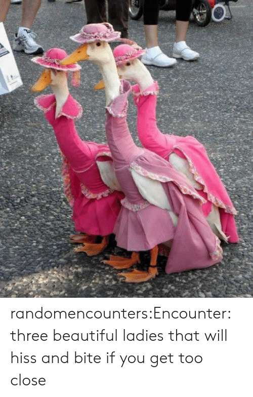 Beautiful Ladies: randomencounters:Encounter: three beautiful ladies that will hiss and bite if you get too close