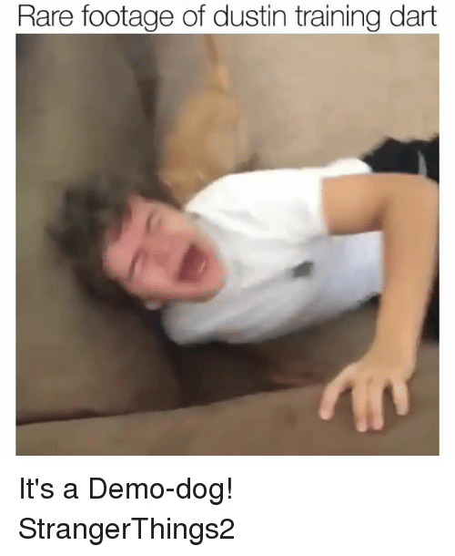 Funny, Dog, and Rare: Rare footage of dustin training dart It's a Demo-dog! StrangerThings2