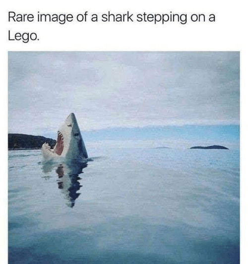 Stepping: Rare image of a shark stepping  Lego.