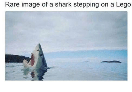 rare-image-of-a-shark-stepping-on-a-lego