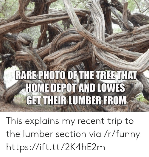 Lowes: RARE PHOTO OF THE TREETHAT  HOME DEPOT AND LOWES  GET THEIRLUMBER FROM This explains my recent trip to the lumber section via /r/funny https://ift.tt/2K4hE2m