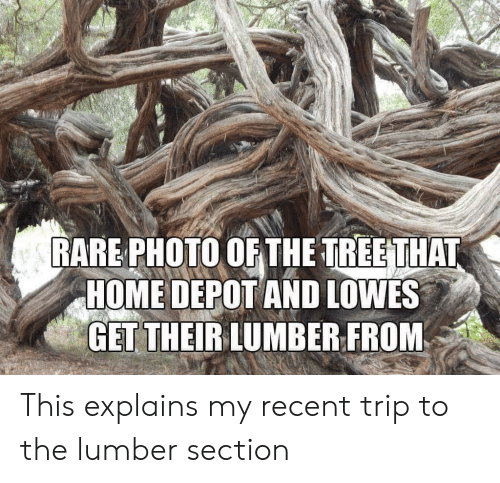 Lowes: RARE PHOTO OF THE TREETHAT  HOME DEPOT AND LOWES  GET THEIRLUMBER FROM This explains my recent trip to the lumber section