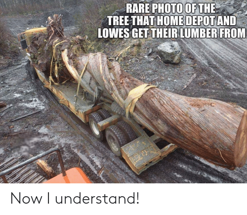 Lowes: RARE PHOTOOFTHE  HOME DEPOT  TREE-THAT AND  LOWES GET THEIRLUMBER FROM Now I understand!