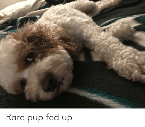 fed up: Rare pup fed up