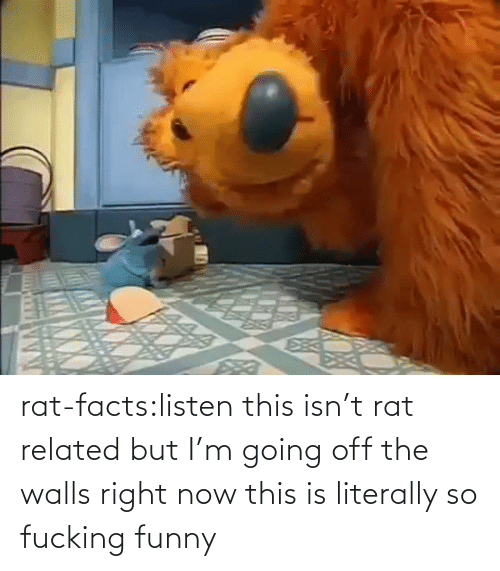 now this: rat-facts:listen this isn't rat related but I'm going off the walls right now this is literally so fucking funny