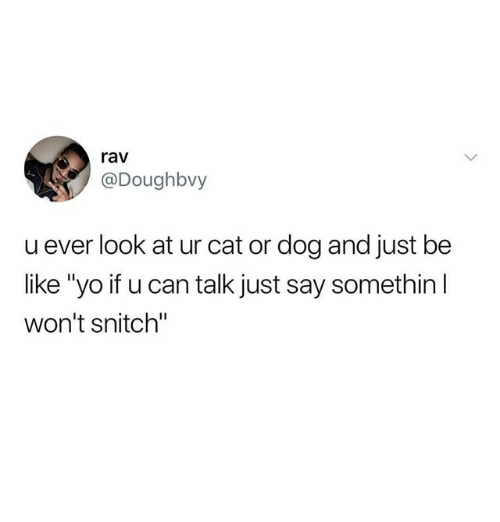 """Be Like, Funny, and Snitch: rav  @Doughbvy  u ever look at ur cat or dog and just be  like """"yo if u can talk just say somethin l  won't snitch"""""""