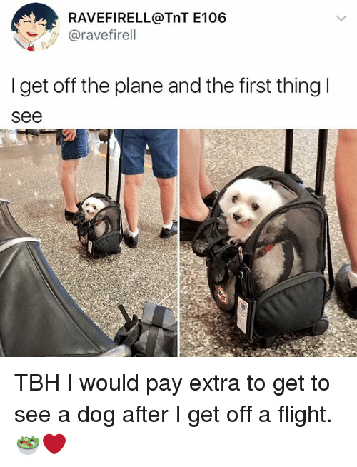 Memes, Tbh, and Flight: RAVEFIRELL@TnT E106  @ravefirell  I get off the plane and the first thingl  see TBH I would pay extra to get to see a dog after I get off a flight. 🥗❤️