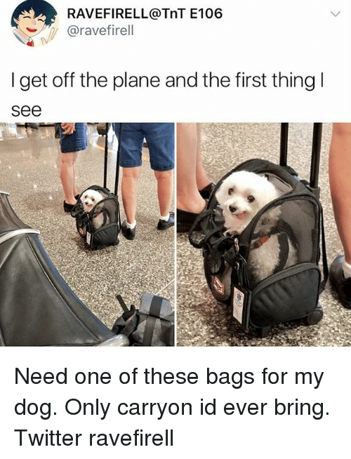 Memes, Twitter, and 🤖: RAVEFIRELL@TnT E106  @ravefirell  I get off the plane and the first thingl  see Need one of these bags for my dog. Only carryon id ever bring. Twitter ravefirell