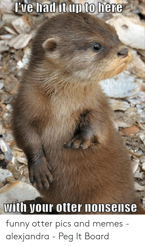 otter nonsense: re hadf  itup to here  with your otter nonsense funny otter pics and memes - alexjandra - Peg It Board