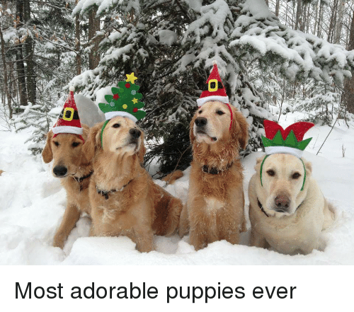 Most adorable puppies ever