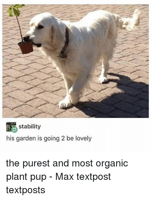 Memes, Pup, and 🤖: RE stability  his garden is going 2 be lovely the purest and most organic plant pup - Max textpost textposts