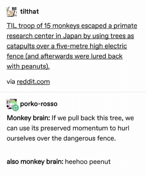 Peanuts: RE tilthat  TIL troop of 15 monkeys escaped a primate  research center in Japan by using trees as  catapults over a five-metre high electric  fence (and afterwards were lured back  with peanuts)  via reddit.com  porko-rosso  Monkey brain: If we pull back this tree, we  can use its preserved momentum to hurl  ourselves over the dangerous fence.  also monkey brain: heehoo peenut