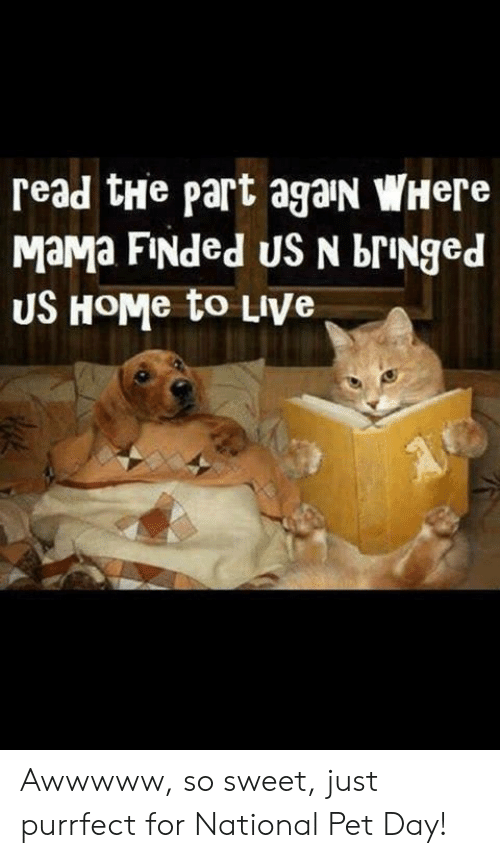 bringed: read tHe part agaIN WHere  MaMa FiNded US N briNged  US HoMe to LiVe Awwwww, so sweet, just purrfect for National Pet Day!