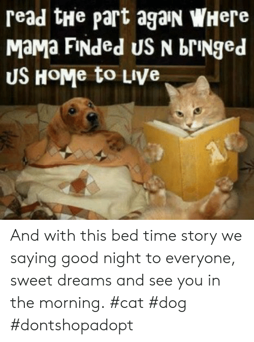 bringed: read tHe part agaN WHere  MaMa FINded US N brINged  US HOME to LIVe And with this bed time story we saying good night to everyone, sweet dreams and see you in the morning. #cat #dog #dontshopadopt
