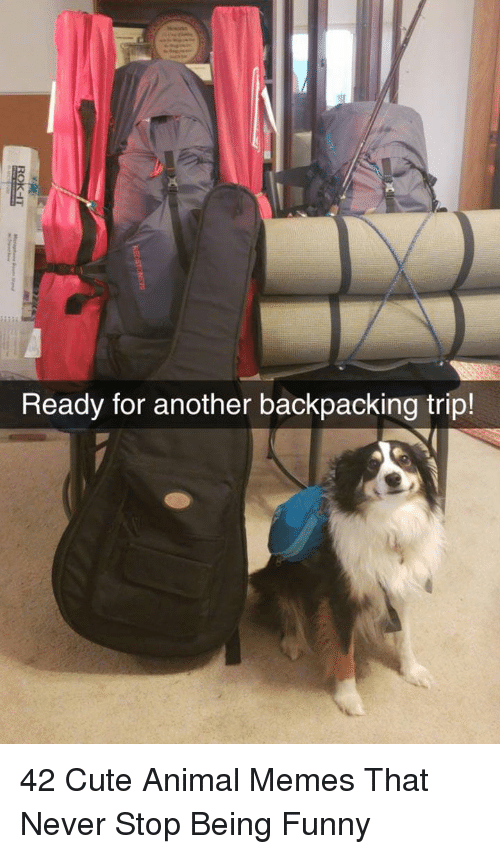 Backpacking: Ready for another backpacking trip! 42 Cute Animal Memes That Never Stop Being Funny