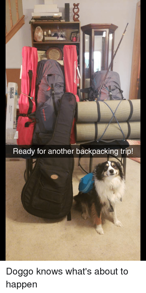 Backpacking: Ready for another backpacking trip! Doggo knows what's about to happen