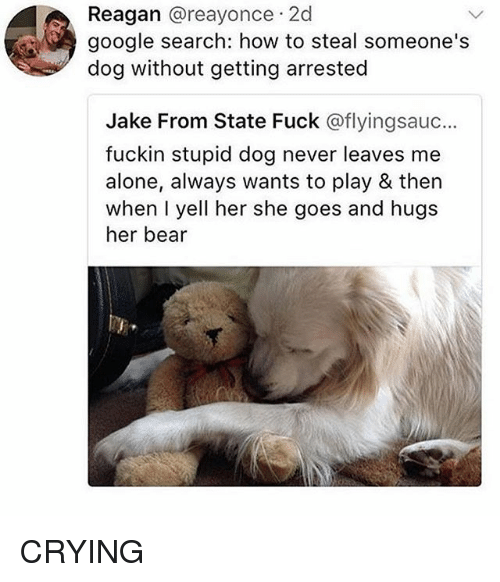 Being Alone, Crying, and Google: Reagan @reayonce 2d  google search: how to steal someone's  dog without getting arrested  Jake From State Fuck @flyingsauc...  fuckin stupid dog never leaves me  alone, always wants to play & then  when I yell her she goes and hugs  her bear CRYING