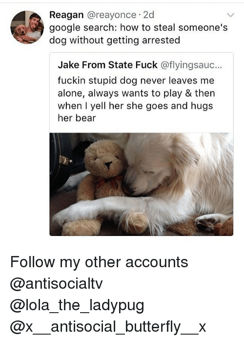 Being Alone, Google, and Memes: Reagan @reayonce 2d  google search: how to steal someone's  dog without getting arrested  Jake From State Fuck @flyingsauc..  fuckin stupid dog never leaves me  alone, always wants to play & then  when I yell her she goes and hugs  her bear Follow my other accounts @antisocialtv @lola_the_ladypug @x__antisocial_butterfly__x