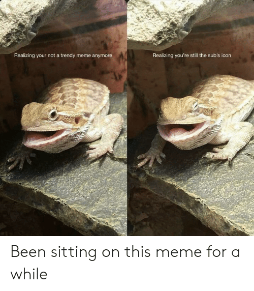 Trendy: Realizing your not a trendy meme anymore  Realizing you're still the sub's icon Been sitting on this meme for a while
